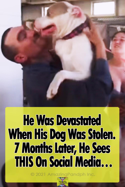 Dog, Pitbull, Stolen dogs, Shelter, adoption, Reunion, Friends,