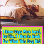 Story of a loyal dog and his sick owner