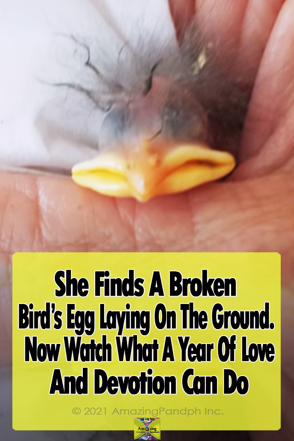 animal, bird, egg, Egg Laying, rescued baby bird, Starling, hatchling, humane, emotional, save a life,