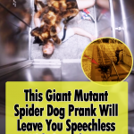 The most Creative Prank ever