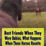 This Horses Reunion Is Heart-Melting