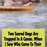 Two Scared Dogs Are Trapped In A Canoe