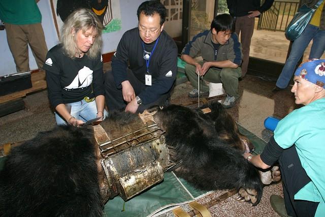 Animals Asia, moon bear, bear bile farming, vietnam,bear,animals rescue,rescue,save animals,save,human being