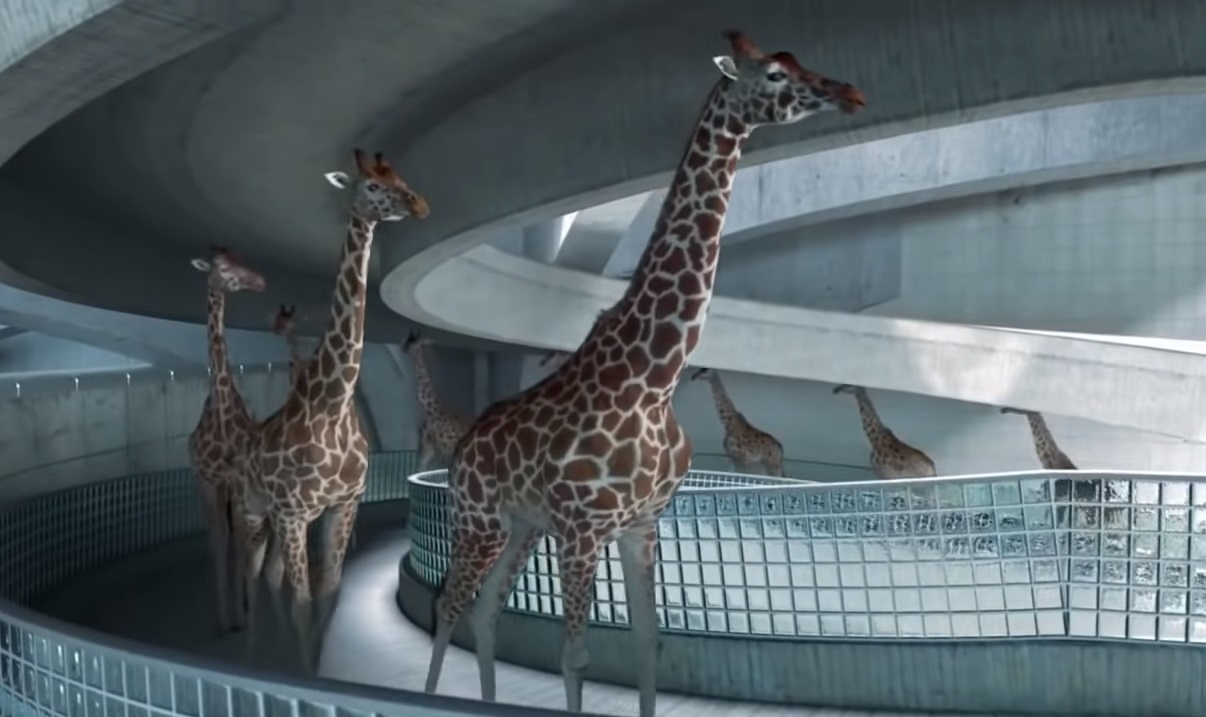 Giraffes, walk,swimming pool,pool,swim,animals,swim,amazing video,best video,viral video,viral post,most viewed,funniest,coolest video,cool