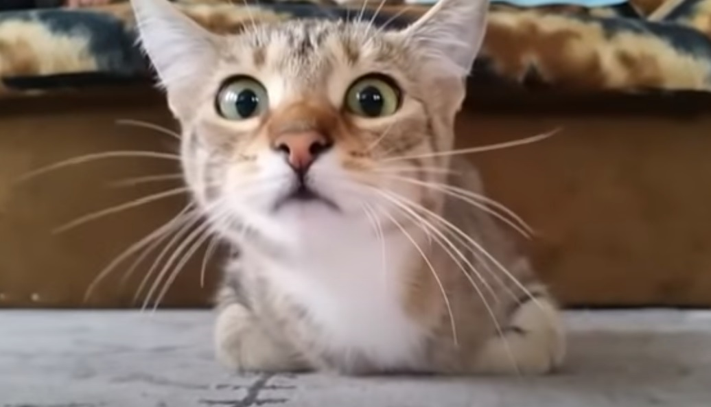 viral, video, epic, cat,animal, horror,film, genre, animal , funny face , funny, cats, dog, comedy, haha, car, bmw, crash,viral video,cutest video,best video,most viewed video