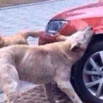 Heartless Man Tries To Kick A Dog
