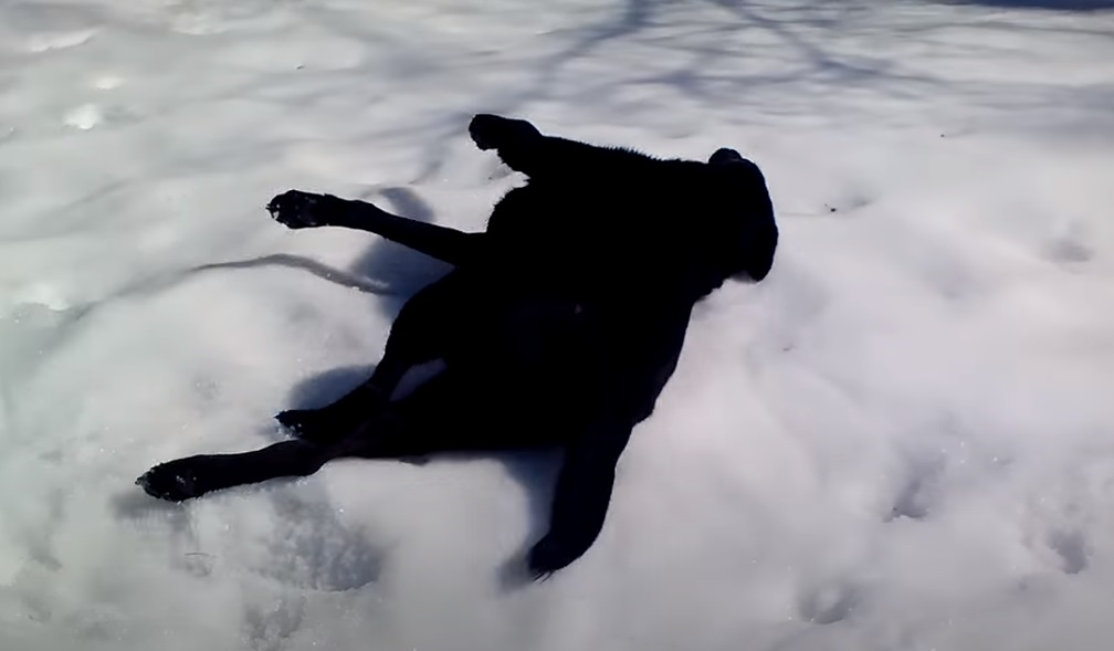 dog,playing animals,playing dogs,playing pets,fynny,animals,pets,dogs,funniest video for dogs,animals in snow,best animals in snow,cutest animals in snow,animals playing in snow,viral video,viral post,viral stories