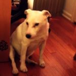 Mom Confronts Her Dog For Making A Mess. But I Was In DISBELIEF At What This Dog Did Next! ROFL!