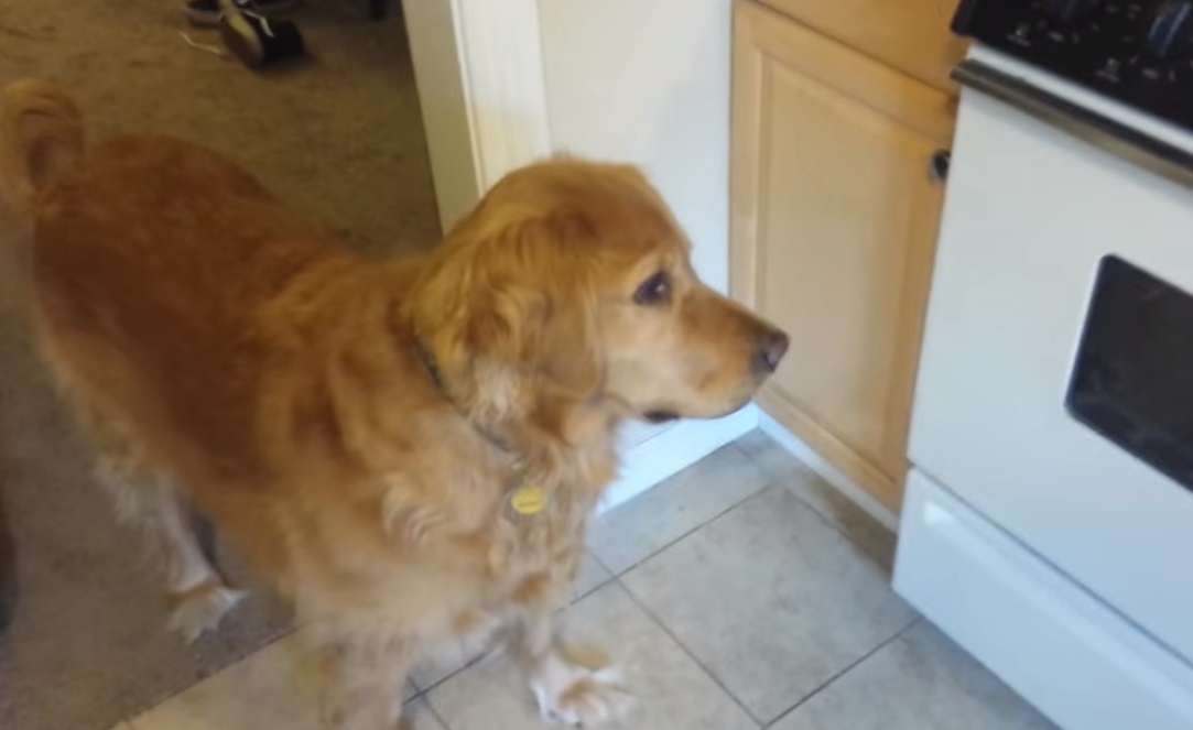 dog food solution,best video,viral video,most viewed,amazing posts,viral posts ,viral video for dogs,most viewed video,best of,cool video,free food for dogs,food for dogs,clever way to make food for dogs