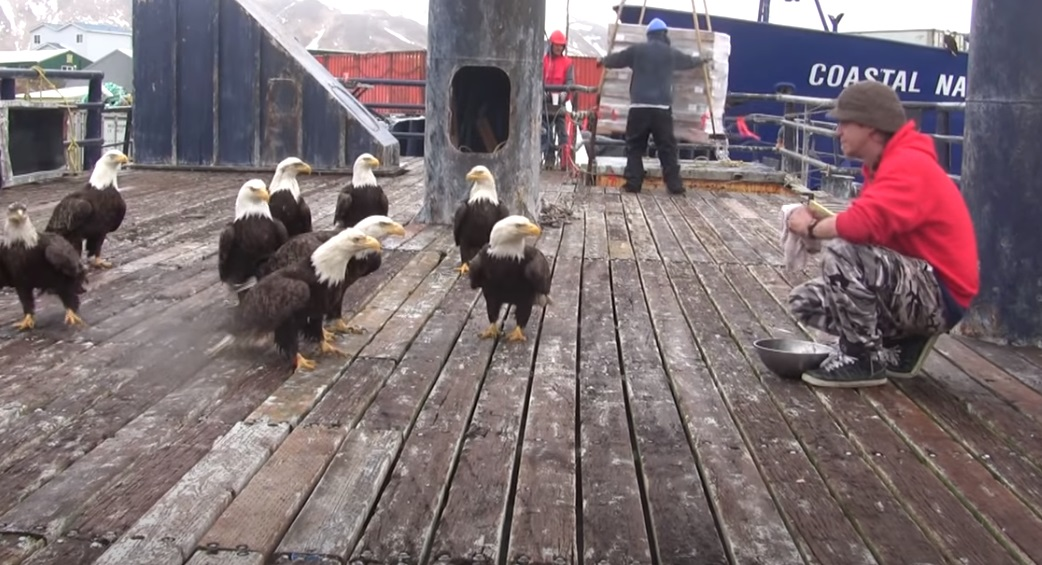 viral,video,eagles,feeding eagles,feeding birds,birds,video,viral video,fisherman,fish,sea,boat,eagle in the boat