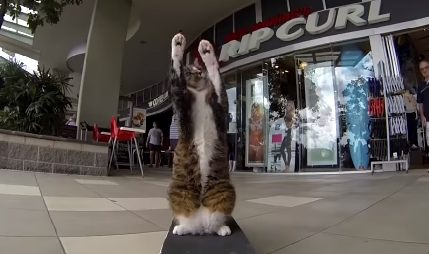 viral,bestof,video for cats,best cats videos,most viewed posts,most shared posts,viral articles for cats,cats 's best video,cats life,most famous cat,cats goes viral