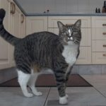 Her Owner Asks Her To Do A Trick. What She Does In Response? You'll NOT Believe Your Eyes!
