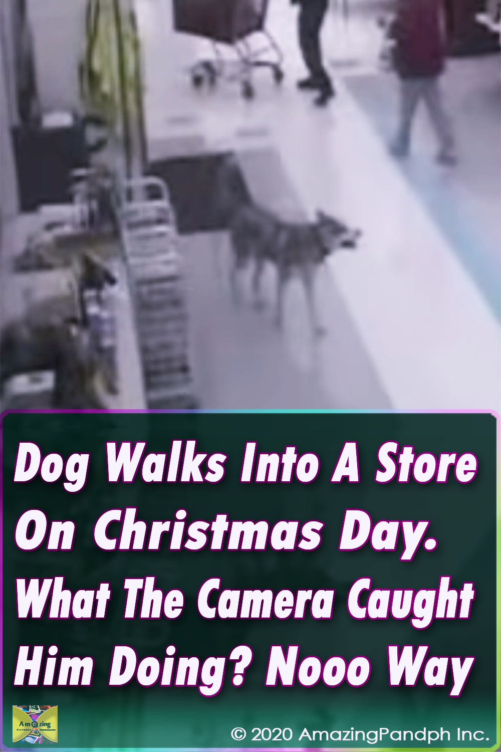 viral video,dogs video,chrismtas and dogs,markets in christmas,christmas days,best christmas videos,best christmas stories,viral christmas stories,amazingdog stories,best of,dogs,pets,dog,pet
