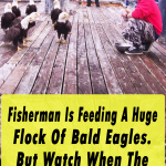viral,video,eagles,feeding eagles,feeding birds,birds,video,viral video,fisherman,fish,sea,boat,eagle in the boat