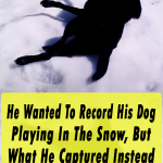 He Record His Dog Playing In The Snow