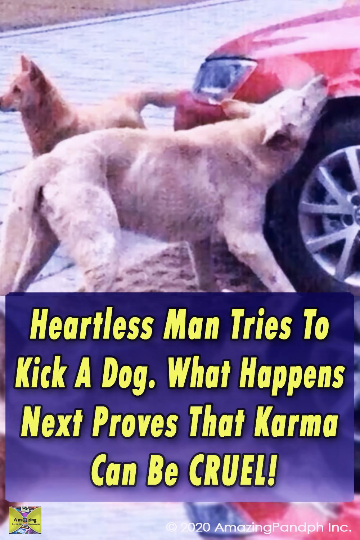 dog,karma,cruel,heartless,hilarious,