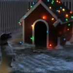 Very cute puppy waiting for Santa