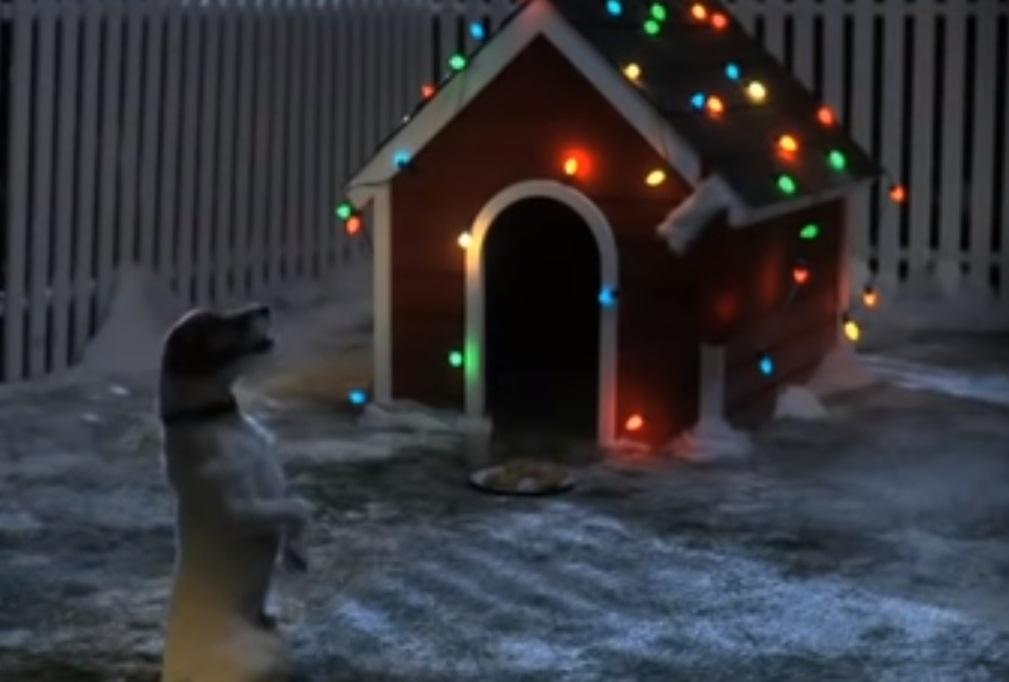 Christmas, puppy, dog, trending, animals, Santa,