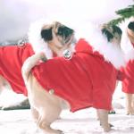 Christmas Song full of pugs
