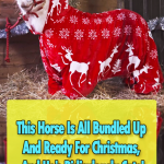Adorable Pony get ready for Christmas
