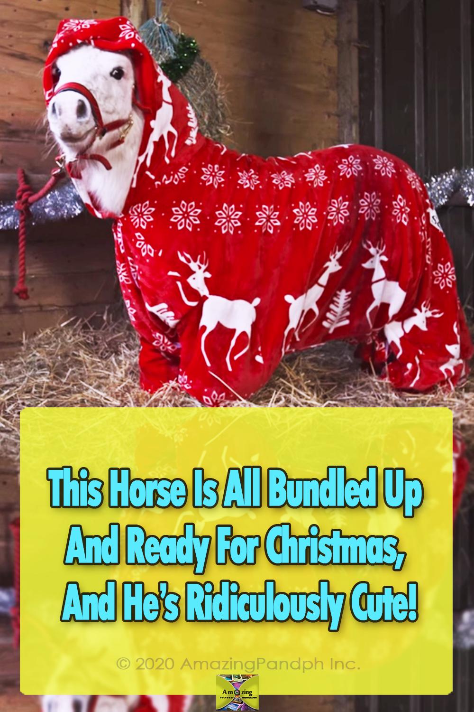 pony, horse, Christmas, adorable, trending, animals,
