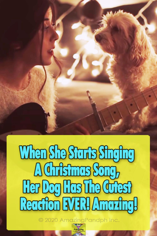 dogs, Christmas, Song, reaction, adorable, Guitar,