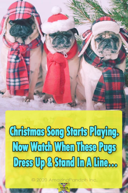 Dogs, animals, Christmas, adorable, song, fashion,