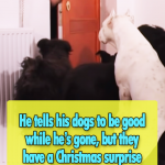 He tells his dogs to be good while he's gone