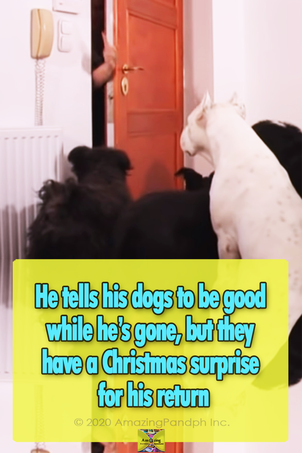 Dogs, Christmas, adorable, talented, trained, amazing,