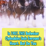 Unforgettable Budweiser Christmas Advert