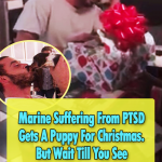 Marine have PTSD Gets A Puppy For Christmas