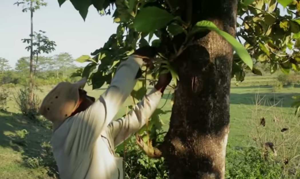 trees,forest,plants,tree planting,human being,viral video,best video ever,most viewed,most shared,how to plant trees,how to creat a forest,how to save nature,mother nature,incredible,brave man