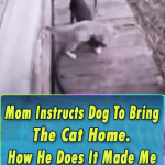 Mom Instructs Dog To Bring The Cat Home. How He Does It Made Me Laugh Till I Cried