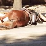 Fatal accident got the life of this poor horse