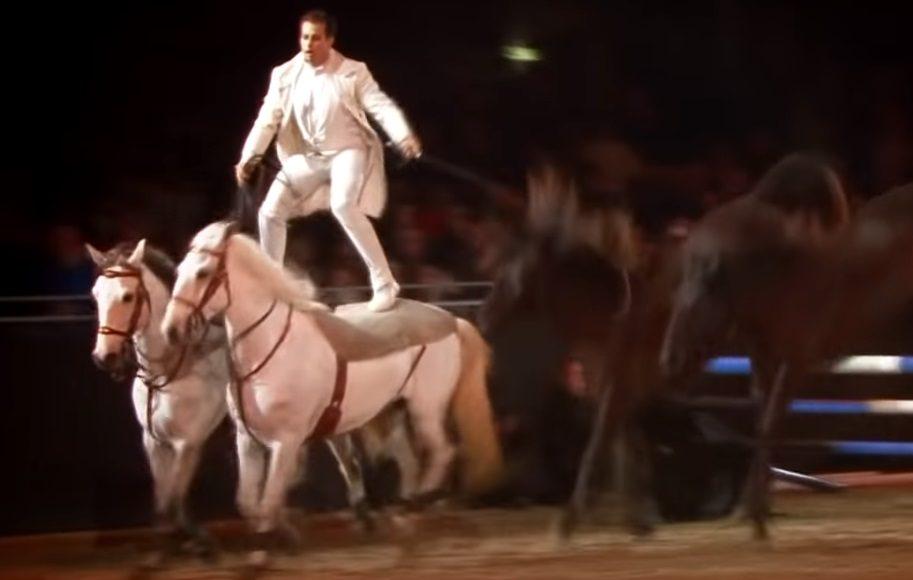 horse, amazing, wow, omg, talent, skills, man, brave,