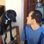 His Owner show Strictness The Dog ask for forgiveness