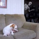 While enjoying His Nap A Skeleton Appears Behind the Dog