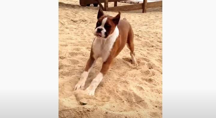dogs, pets, puppies, puppy, cute, amazing, dog tasting lime, dog taste, funniest dog, funniest animals,