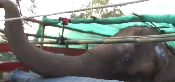 elephant, nature, park, chiangmai, thailand, rescue, animal, love, peace, freedom, cry, sanctuary,