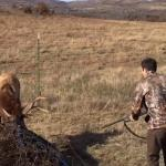 He Found a Stucked Elk In his Farm
