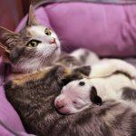 Cat nurses abandoned pit bull puppy