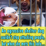 An agressive shelter dog couldnt stop attacking people