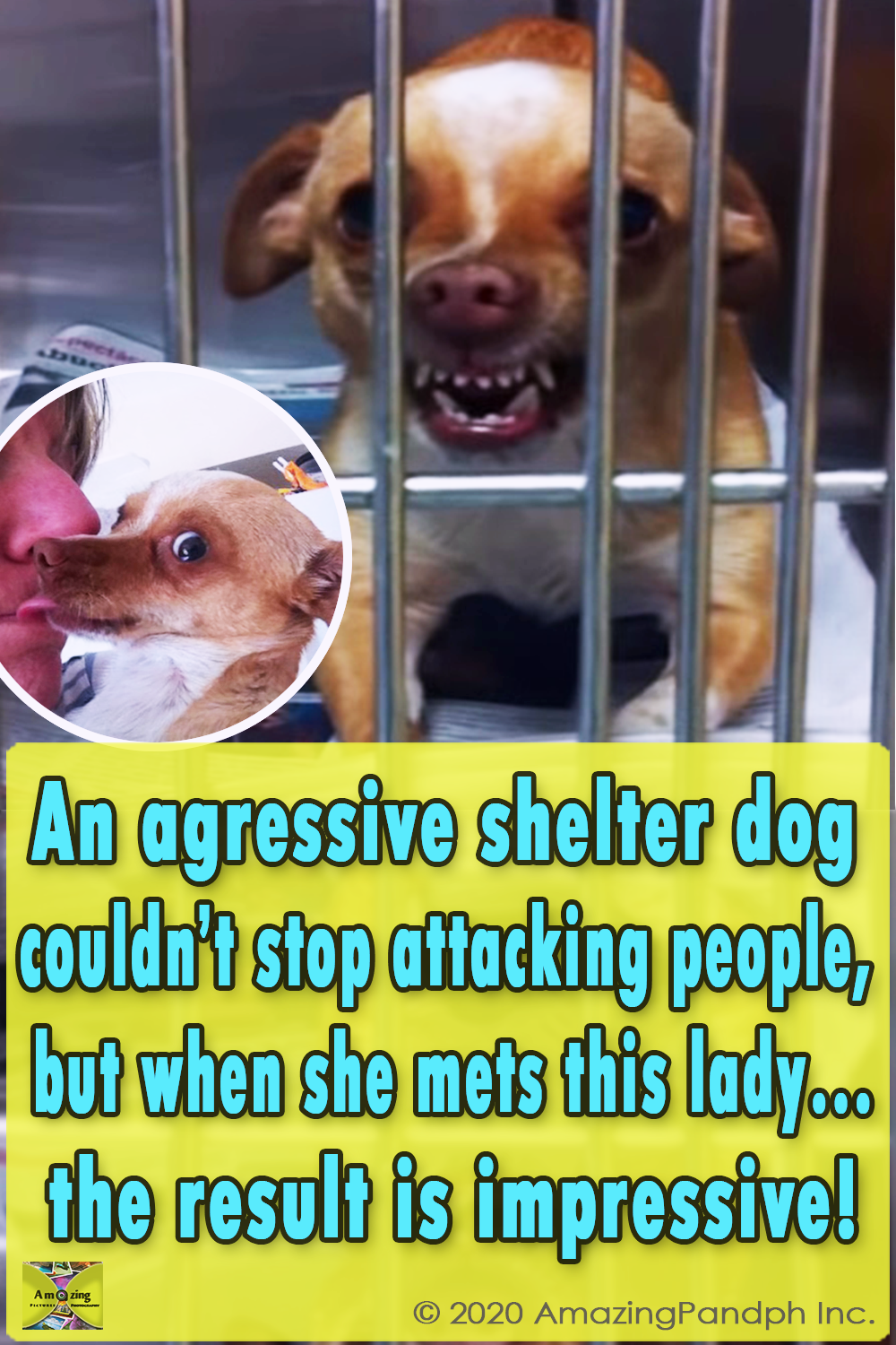 Before, After, Chihuahua ,Animal Breed,Dogs, Rescue Dog, Dog Domesticated Animal), Animals, sunshine the chihuahua, Peace Love and doggie paws, Peace Love,