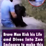 Brave Man Risk his Life and Dives Into Zoo Enclosure