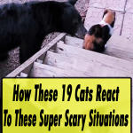 Cats React To Super Scary Situations