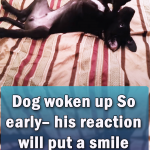 Dog woken up So early