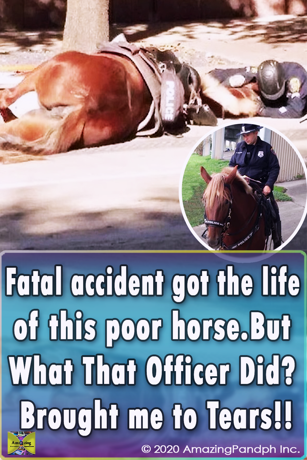 animals, horse, rescue, save, life, helping, accident, car, police horse, fatal accident, hitted by car, last breath,