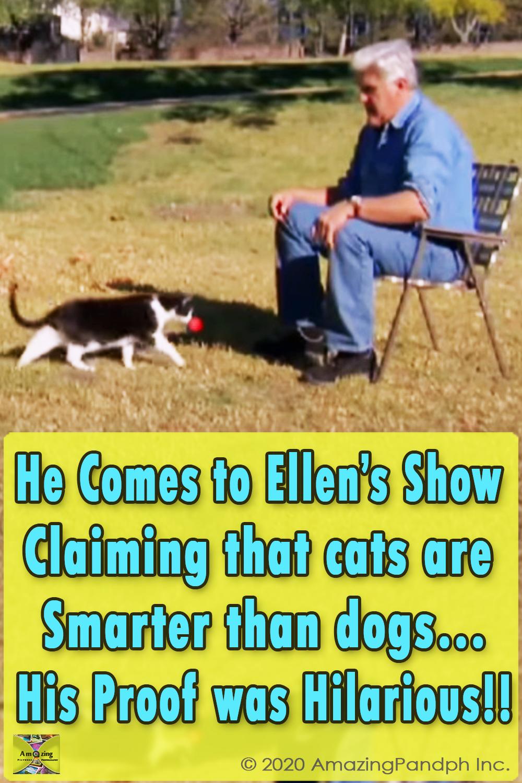 ellen, degeneres, jay, leno, cat, cats, kitty, adorable, animals, pets, funny, comedian, Comedy, Ellen DeGeneres, Jay Leno, Author, Kitten,