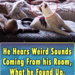 He Hears Weird Sounds Coming From his Room