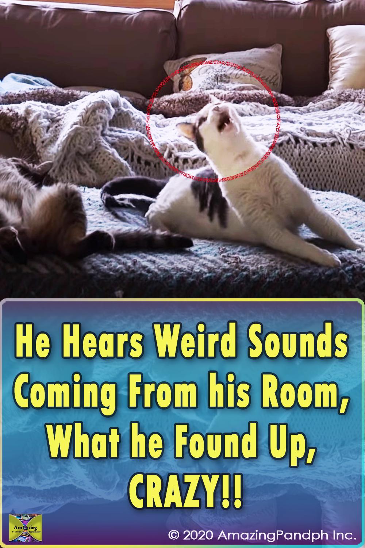 weird cat meow, weird cat sound, cat sound, cat sounds, funny cat meow, funny cat sounds, strange cat meow, cats meow, funny cat, funny cats, broken cat,